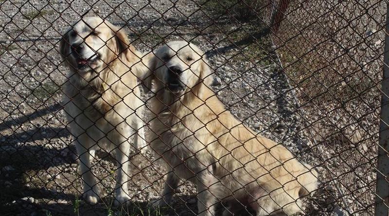 Azil u Brčkom redovno promoviše svoje stanare, usvojeno 1.230 odraslih pasa i 440 štenadi